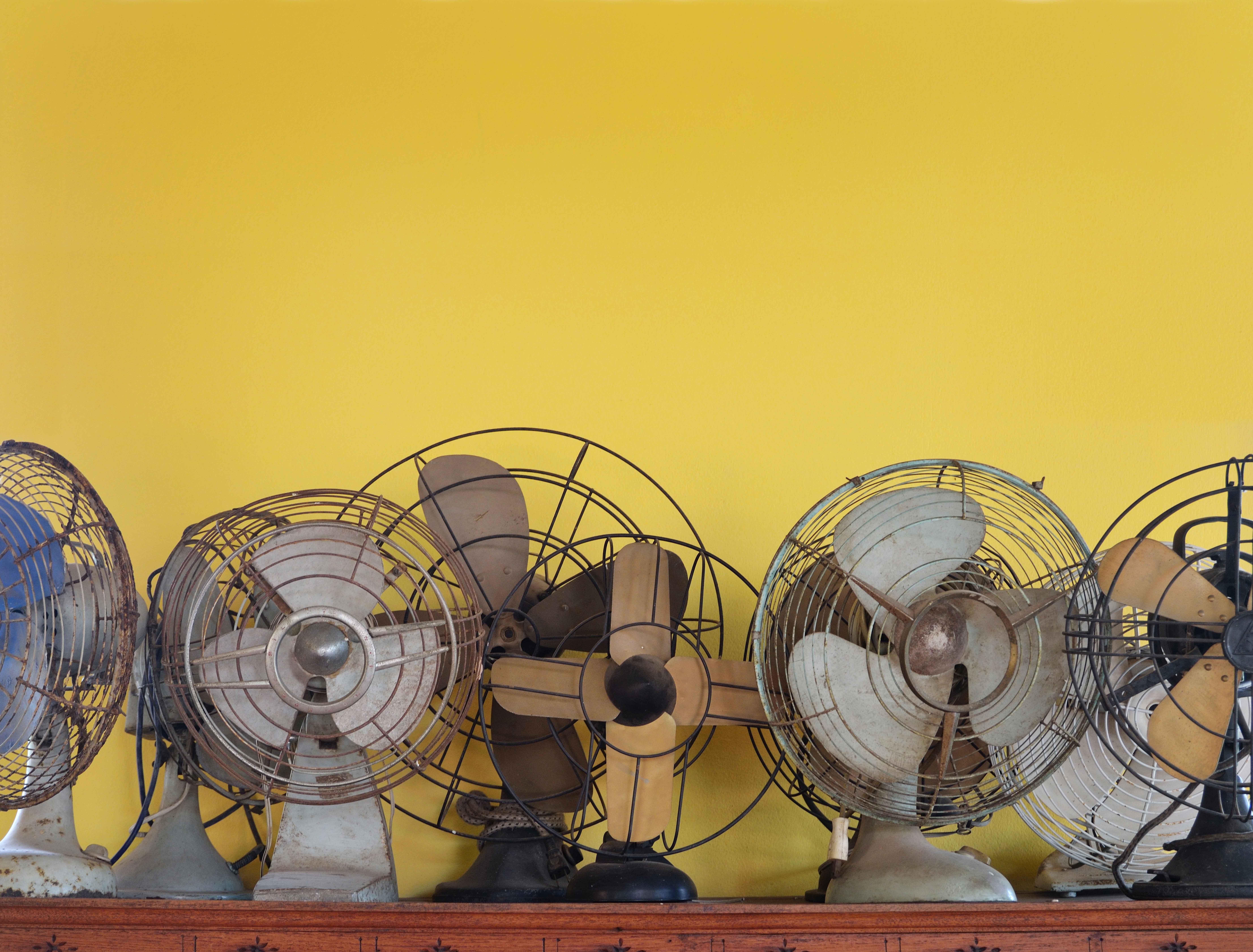 Evolution of fans